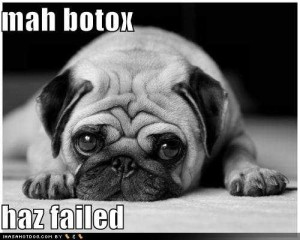 funny-dog-pictures-pug-unimpressed-by-botox-results