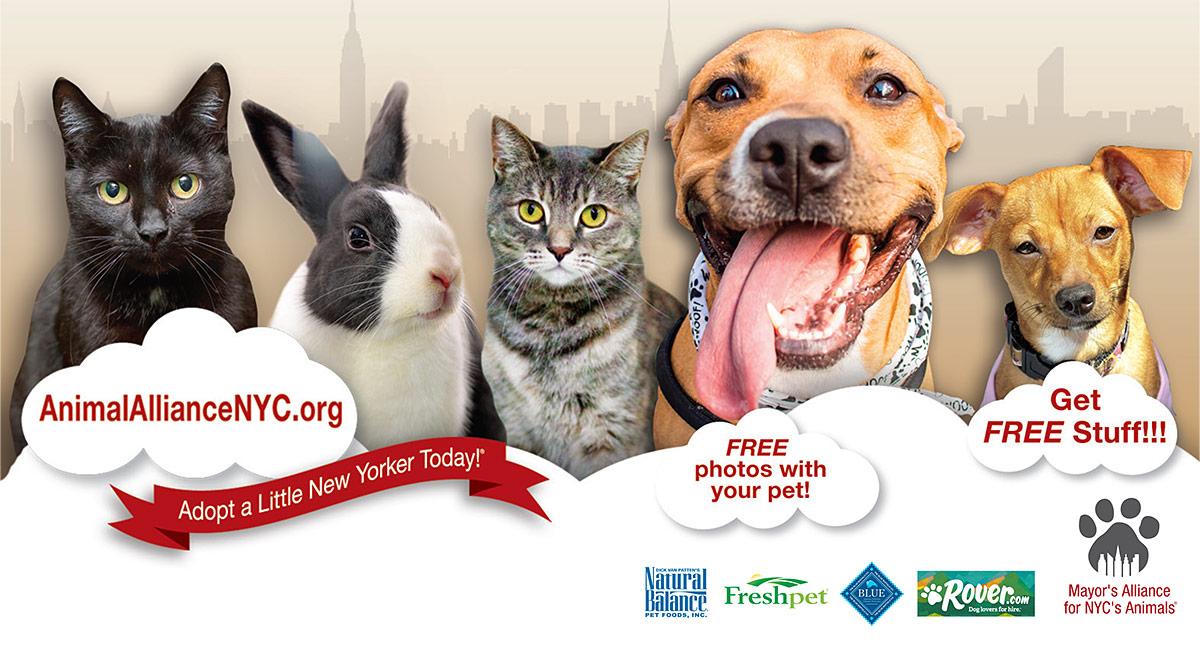 Petco Union Square Dog Adoption